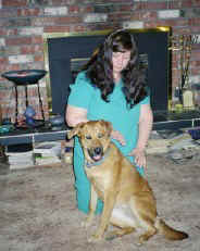 labrador/shepard cross dog sitting receiving Therapeutic Touch