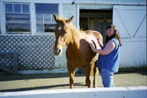 Doing Therapeutic Touch on a horse.