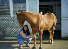 Horse receiving therapeutic Touch to his legs